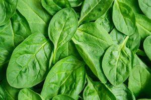 espinafre alimentos ricos em nutrientes