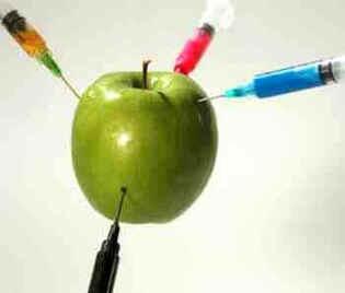 maçã um exemplo de alimentos transgenicos