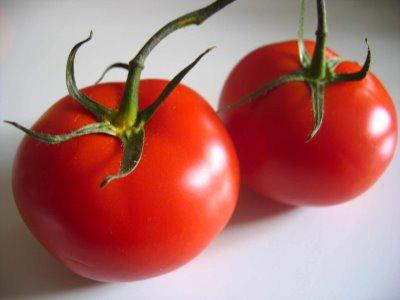 tomate transgenico