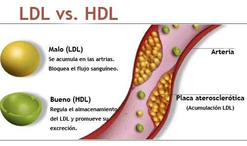 baixar colesterol rapido