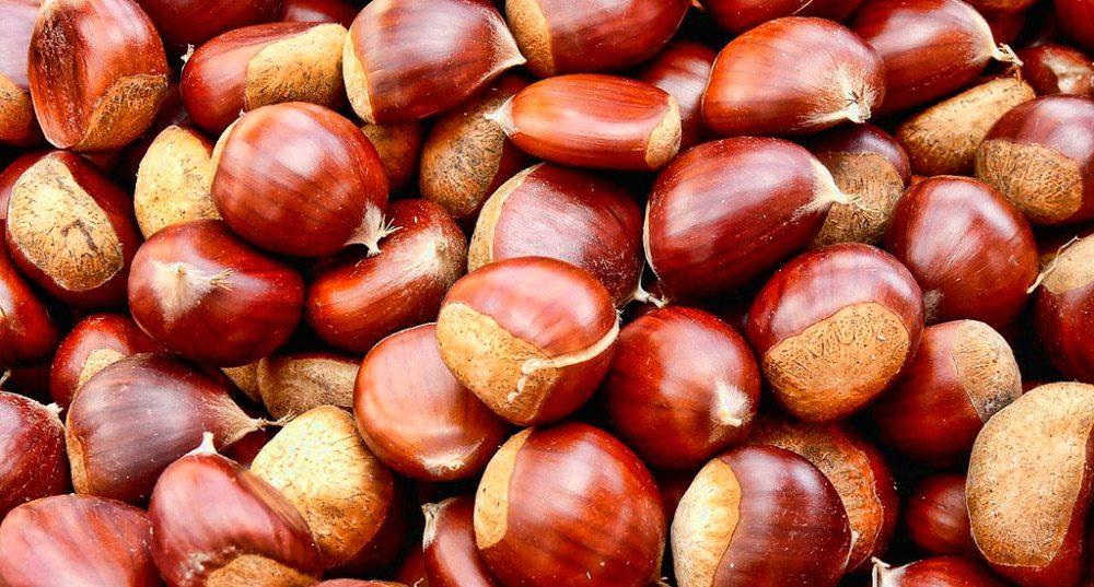 Foto de frutos de castanha
