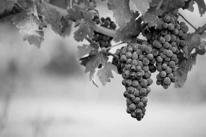 uvas benefícios